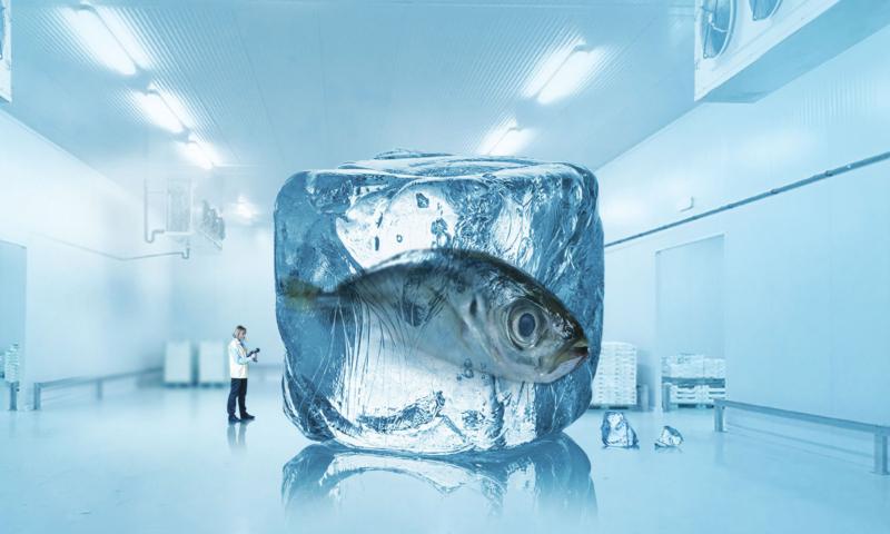 vendita assistenza impianti refrigeranti